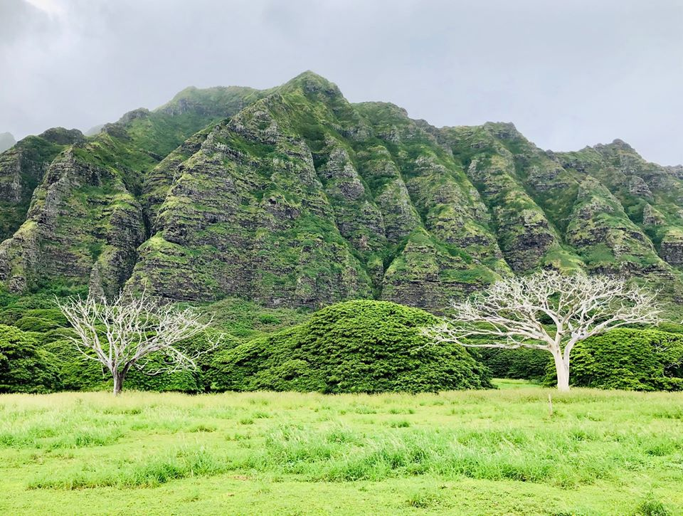 Aim Coaching. Coachup Your Life. Baumschönheiten III. Oahu.